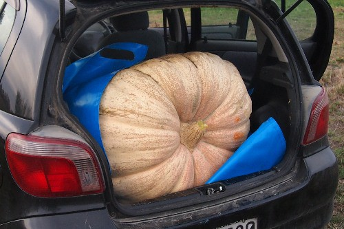 My pumpkin the boot of my car with the tarp.