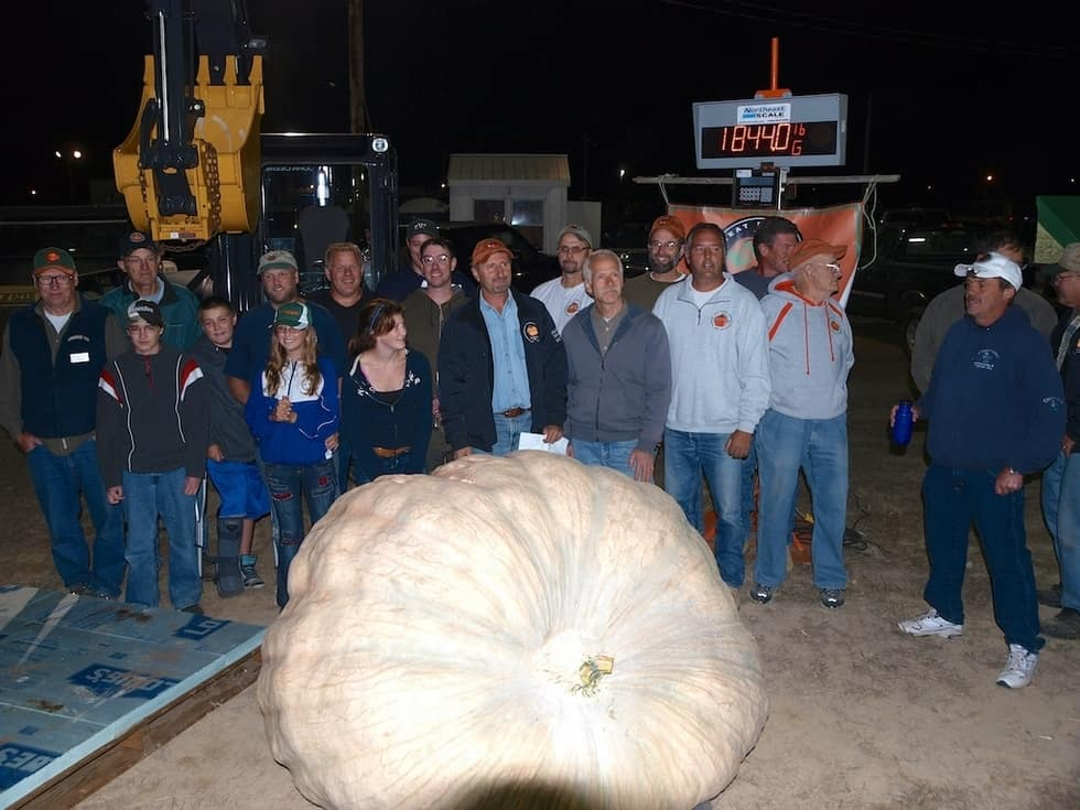New World Record Giant Pumpkin – For the time being