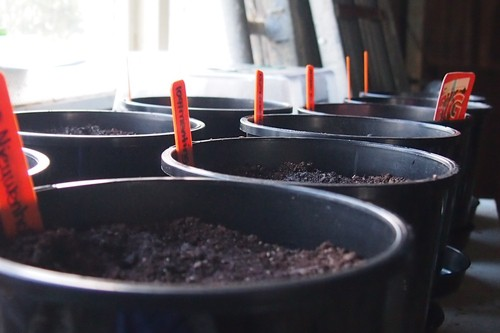 Seeds all potted, waiting for them to appear.