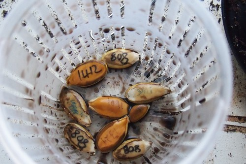 The seeds after being pulled out of the container.