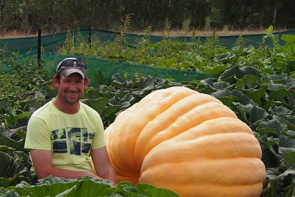 Giant Pumpkin Grower Profile – Tim