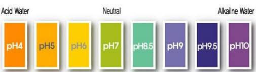 The DIY guide to PH testing your soil at home