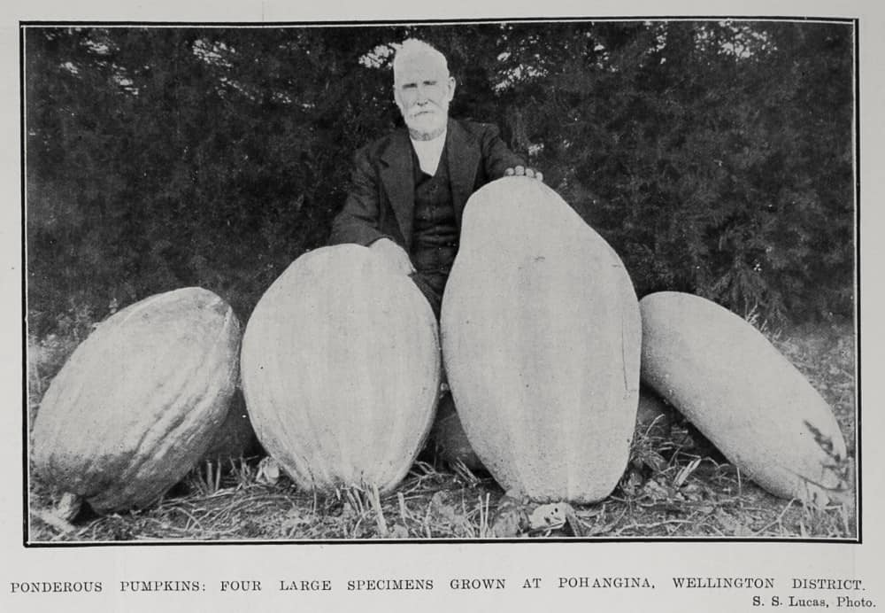 Vintage photo of a giant pumpkin grower