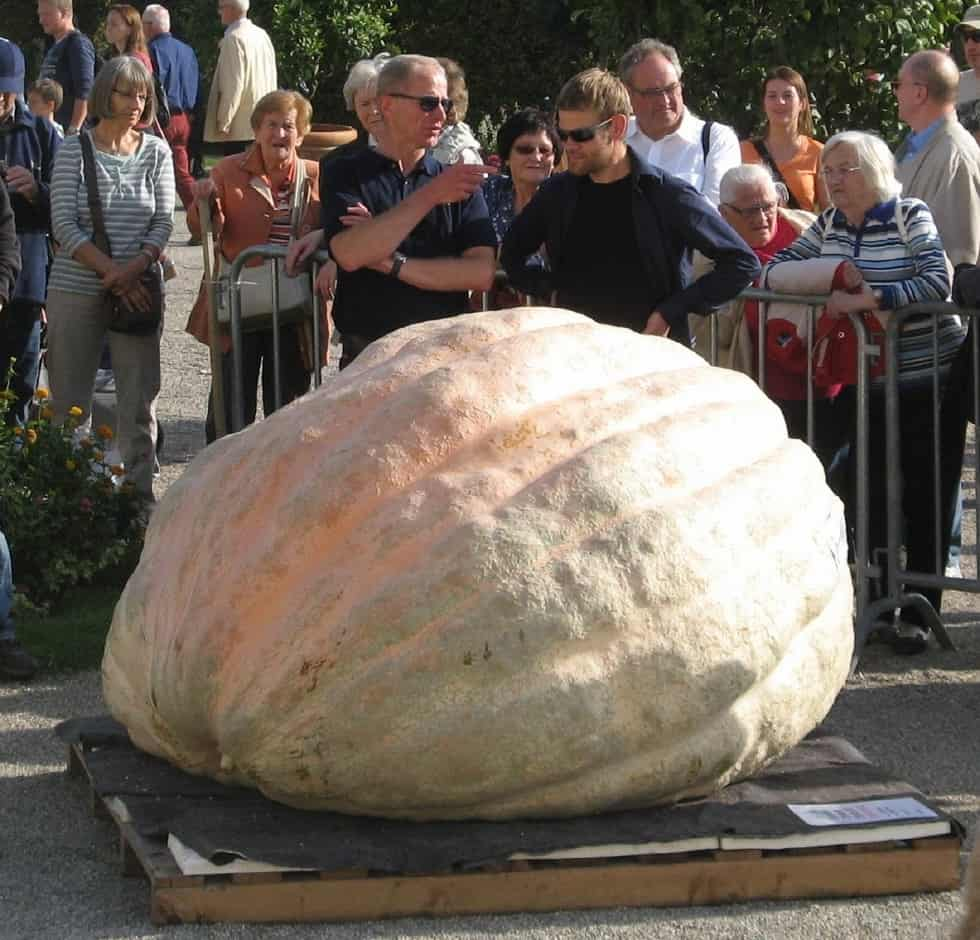 Beni Meier World Record Giant Pumpkin Holder 2323 Pounds