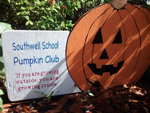 Southwell School Pumpkin Growing Club