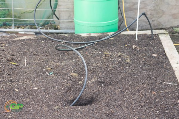 Irrigation in the soil to help warm it Tim's patch 150sf foot challenge