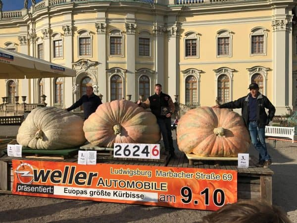 Mathias Willemijns 2624.6 World Record Pumpkin with 2nd and 3rd place