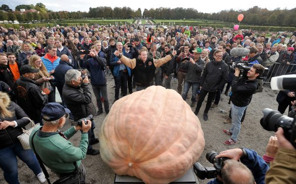 Mathias Willemijns 2624.6 World Record Pumpkin Surrounded by crowds and media