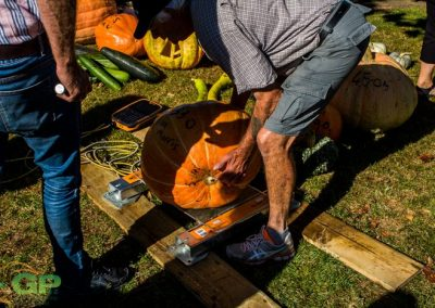 Weighing a pumpkin at the 2018 Marton Harvest Festival