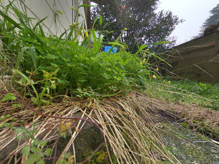 Weeds in the Tiny Patch