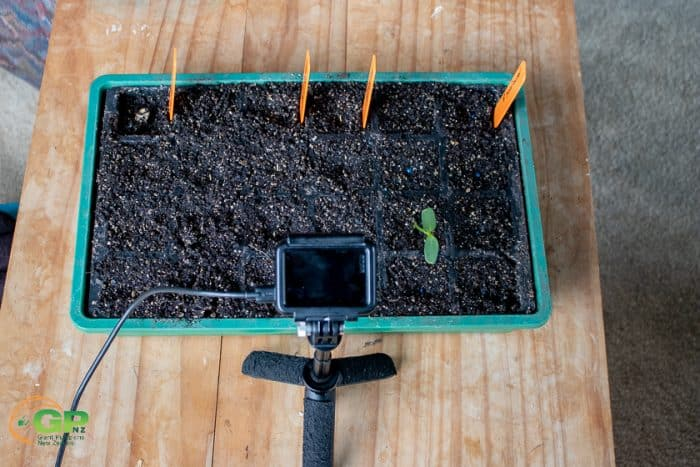 Setup of time lapse for seedlings