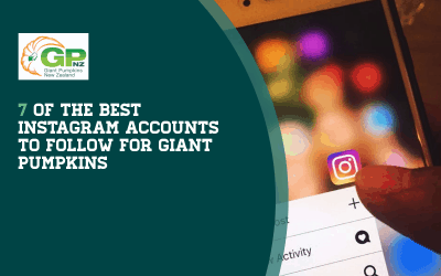 7 of the Best Instagram Accounts to Follow for Giant Pumpkins