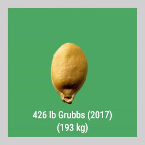 426 Grubbs 2017