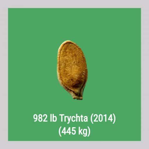 982 Trychta 2014