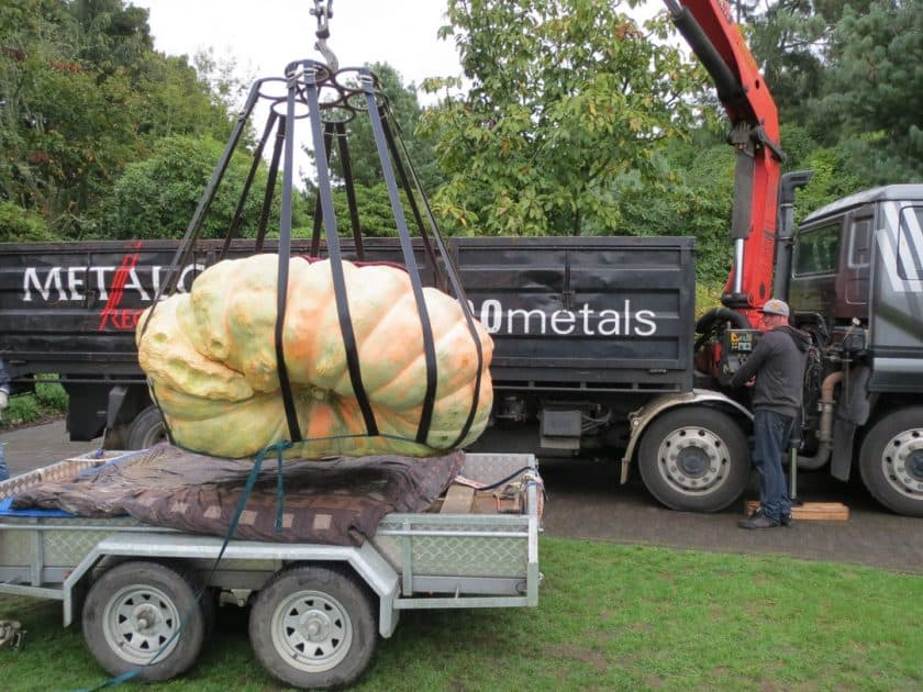 Pumpkin being lifted by Hi Ab