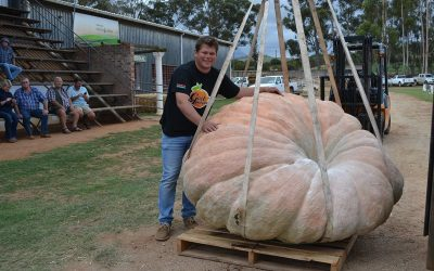New South African Giant Pumpkin Record 2020