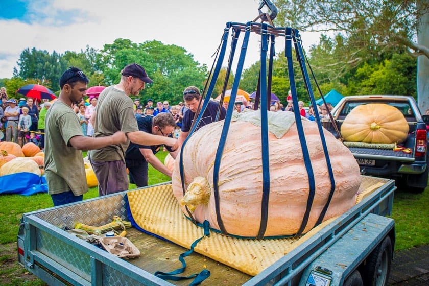 Pumpkin on foam mat about to be lifted out of trailer