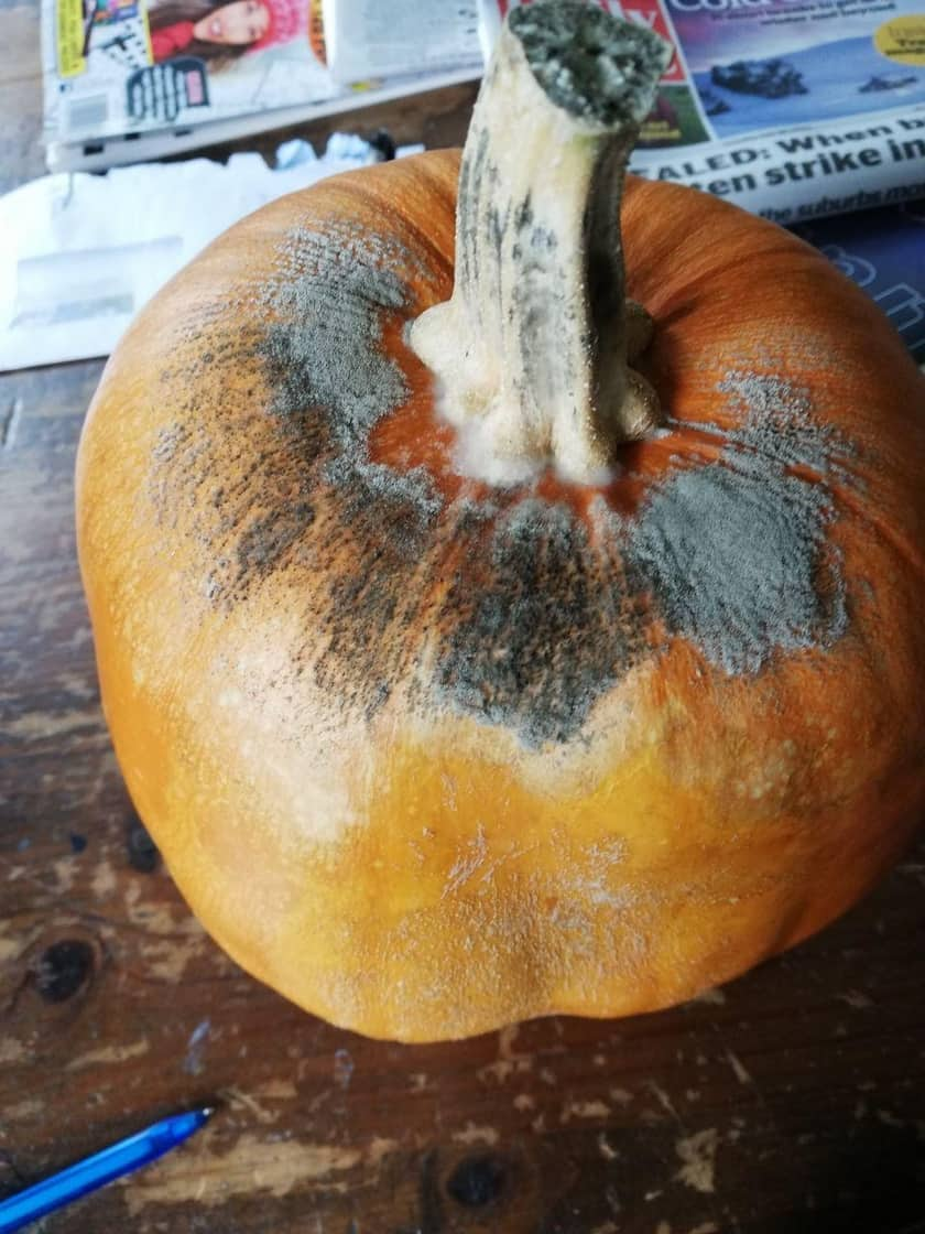 Colin the pumpkin with mould on it