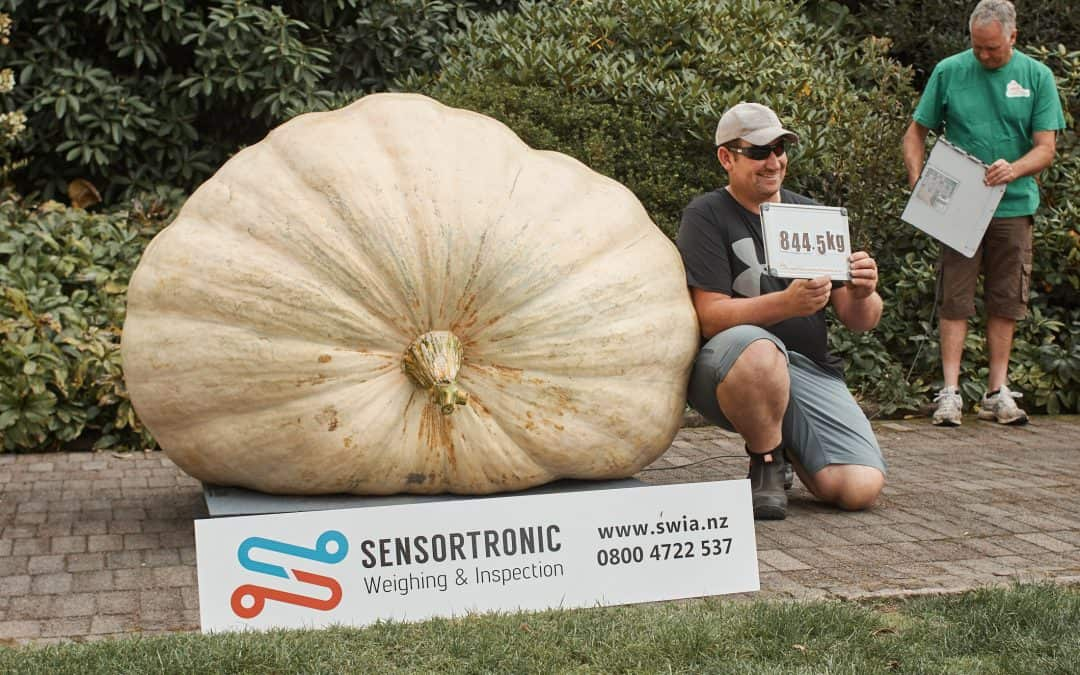 New NZ Giant Pumpkin Record 844.5kg