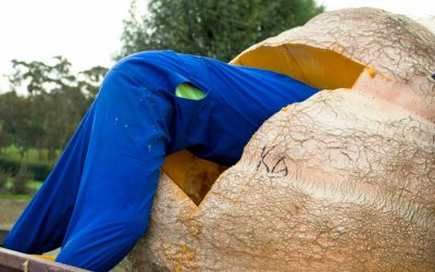 Removing Seeds from the Heaviest Pumpkin Ever Grown in New Zealand